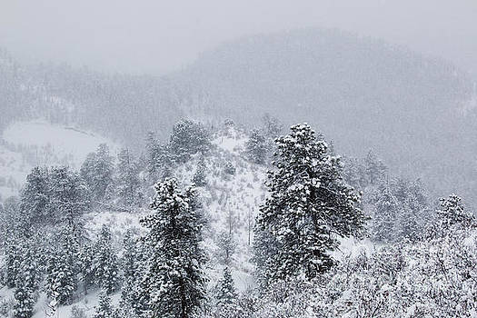 Steve Krull - Snow on the Ridge in the Pike National Forest
