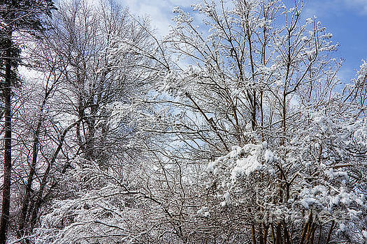 Snow on Tree Branches by Jill Lang