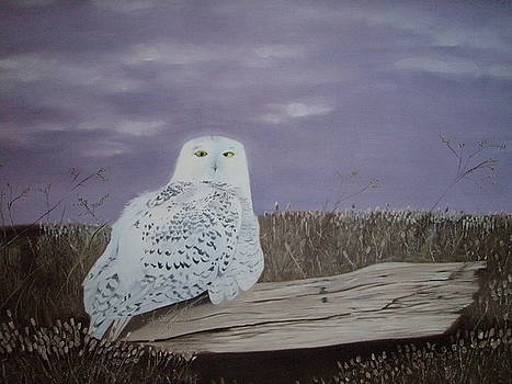 Snow Owl by James Holding
