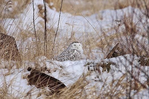 Snow Pile by Teresa McGill