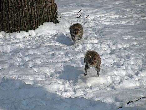 Snow Race by Jake Danishevsky