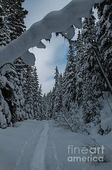 Rod Wiens - Snow Shoe Trail