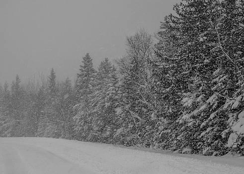 Snow Storm by Stephanie Maatta Smith
