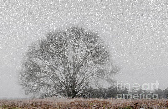 Snow Storm Tree by Kathy Baccari