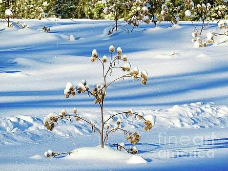 Snow topped by Brenda Ketch