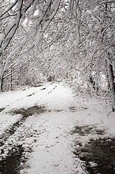 Snow Trail by Amanda Kiplinger