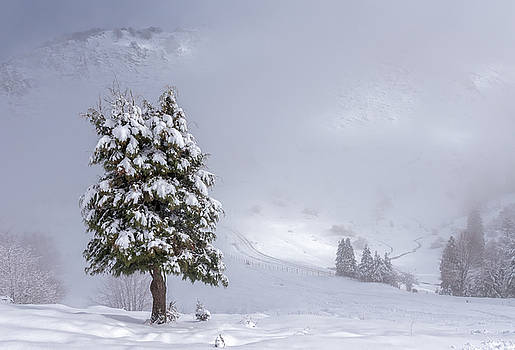 Snow Tree by ACAs Photography