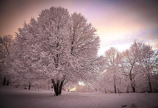 Snow Tree at Dusk by John Forde