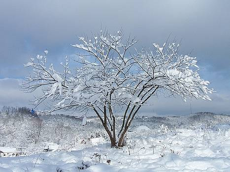 Snow Tree by Harriet Emerson
