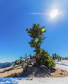 Snow Tree by Jonny D