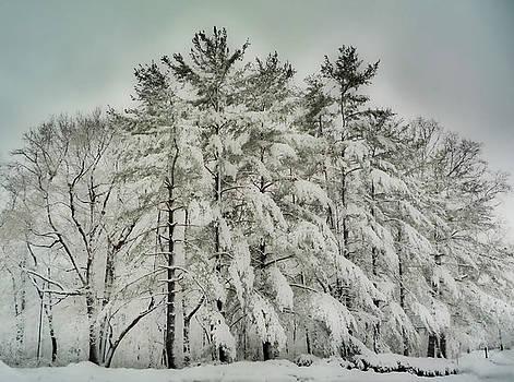 Snow Trees  HDR by Thomas  MacPherson Jr