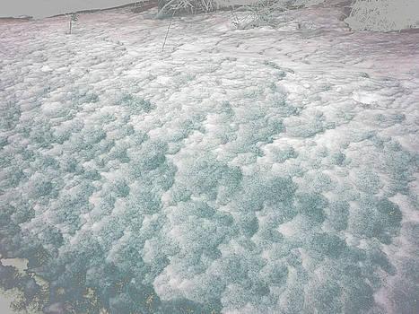 Anne Cameron Cutri - Snow Waves