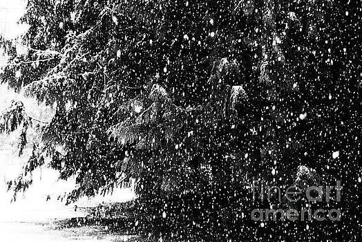 Snow by Yulia Kazansky