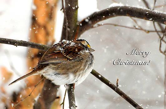 Lois Bryan - Snowball Christmas Card