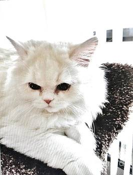 Snowball is 92 Year Old Widows Cat by Marsha Heiken