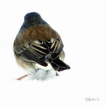 Sandy Rubini - Snowbird