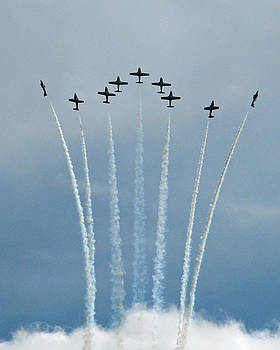 Snowbirds by Chaz McDowell