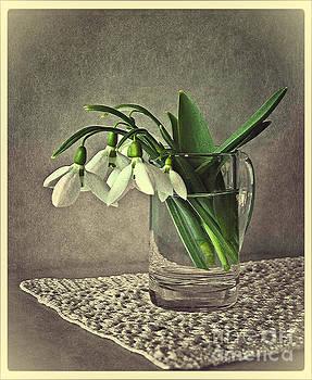 Snowdrops in vintage by Binka Kirova