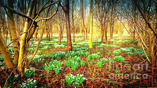 Snowdrops in the woods by Mick Flynn