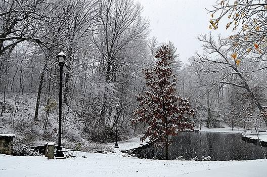Snowfall in Lincoln Park II by Sue Houston