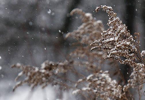 Linda Shafer - Snowfall