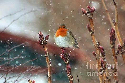 Snowfall  by Vicki Spindler