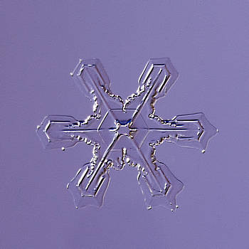 Snowflake Beid - 2009 by Paul Burwell