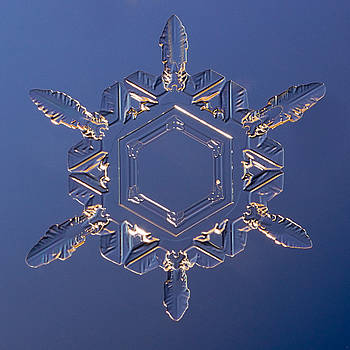 Snowflake Doradus 2010 by Paul Burwell
