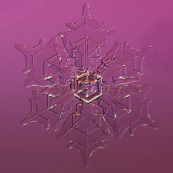 Snowflake Gomesia - 2009 by Paul Burwell