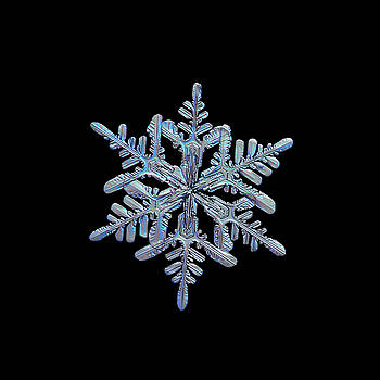 Snowflake macro photo - 13 February 2017 - 1 black by Alexey Kljatov