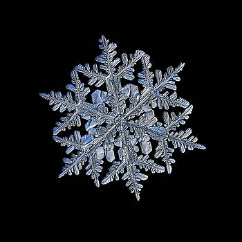 Snowflake macro photo - 13 February 2017 - 3 black by Alexey Kljatov