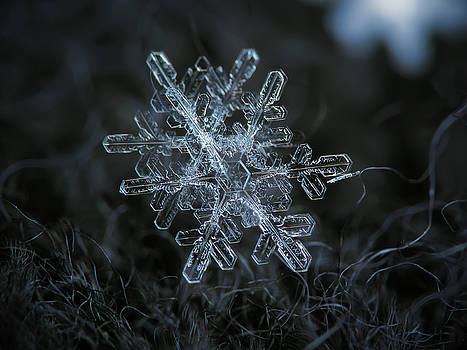 Snowflake of January 18 2013 by Alexey Kljatov