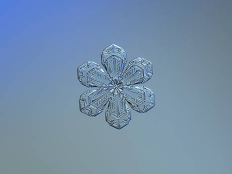 Snowflake photo - Forget-me-not by Alexey Kljatov