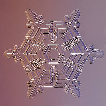 Snowflake Procyon by Paul Burwell