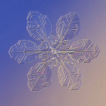Snowflake Rastaban - 2010 by Paul Burwell