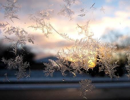 Alfred Ng - snowflakes