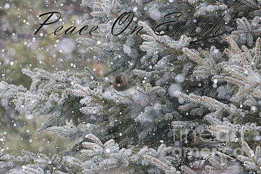 Sandra Huston - Snowing In Maine - Peace On Earth Christmas Card