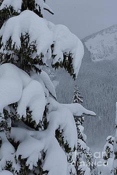 Rod Wiens - Snow...Just a Bit