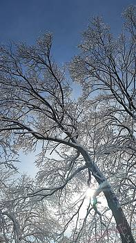 Snowshine by Leara Nicole Morris-Clark