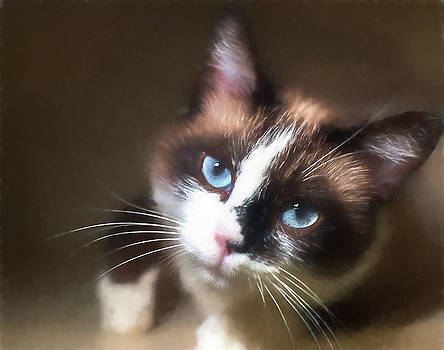 Snowshoe by Mary OMalley