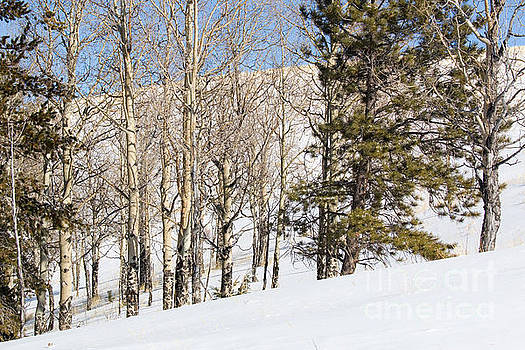 Steve Krull - Snowshoe Trail in the Colorado Rocky Mountains