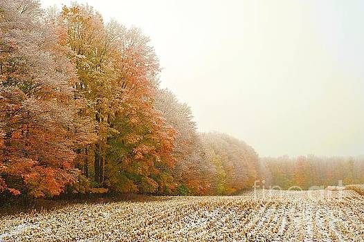 Snowy Autumn Field by Terri Gostola
