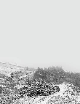 Snowy Background by Mike Taylor