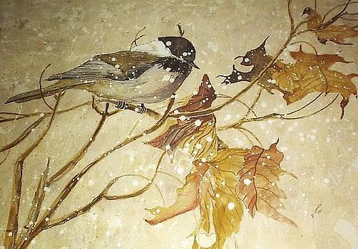 Snowy bird by Darren Cannell