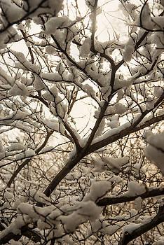 Dana Sohr - Snowy Blanket