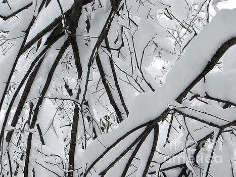 Snowy Branches 2 by Adrian March