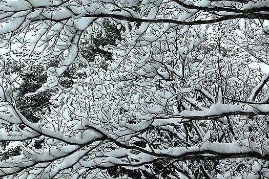 Allen Nice-Webb - Snowy Branches