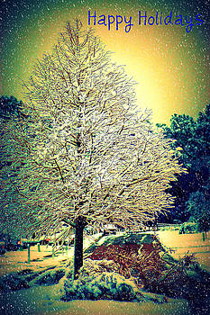 DONNA BENTLEY - Snowy Days