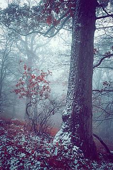 Snowy Dreams of Pine Tree by Jenny Rainbow