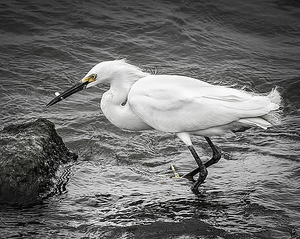 Snowy Egret 1 by Mark Peavy